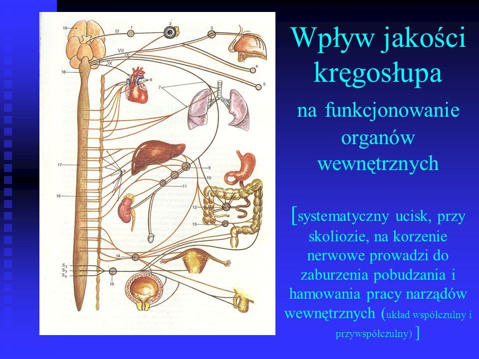 Wpływ jakości kręgosłupa na funkcjonowanie organów wewnętrznych [systematyczny ucisk, przy skoliozie, na korzenie nerwowe prowadzi do zaburzenia pobudzania i hamowania pracy narządów wewnętrznych (układ współczulny i przywspółczulny) ]